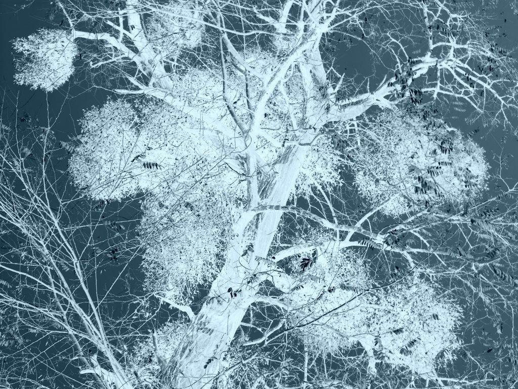 fig3-inversion_2010